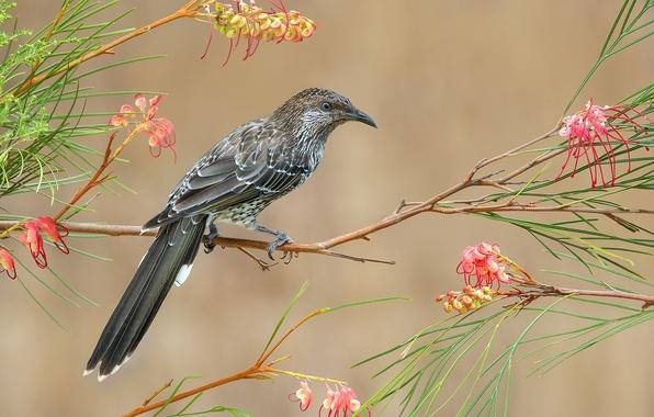 Картинка листья, цветы, птица, ветка, перья, клюв, хвост, сережчатый медосос