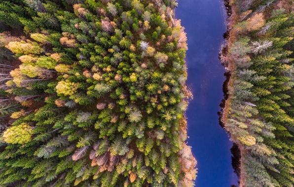 Обои лес, природа, река, вид сверху