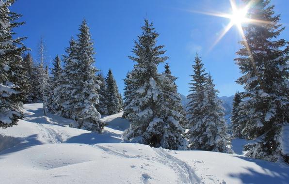 Картинка зима, лес, небо, солнце, лучи, снег, деревья, следы
