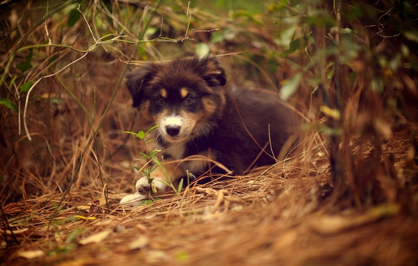 Картинка трава, природа, растение, собака, щенок, лежа, Ridley