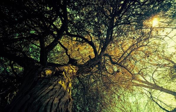 Картинка солнце, свет, деревья, ветки, природа, фон, дерево, ветви, вид, лучи солнца