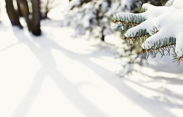 Картинка зима, макро, снег, иголки, природа, ели, ёлка, ёлки