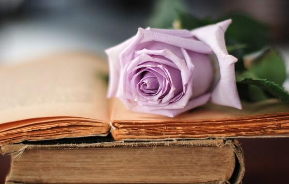 Картинка цветок, сиреневый, роза, книги, старые, лепестки