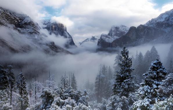 Картинка зима, лес, облака, снег, деревья, горы, природа, туман, Калифорния, USA, США, Йосемити, Yosemite National Park