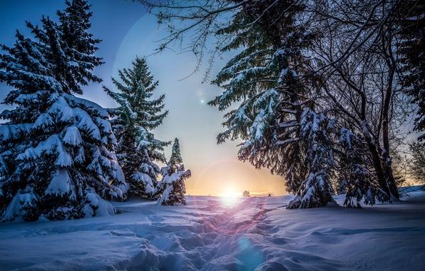 Картинка зима, солнце, снег, деревья, закат, вечер, ели