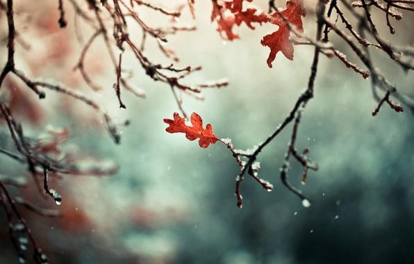 Картинка осень, листья, снег, ветки, природа, ветви