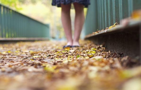 Картинка листья, девушка, макро, фон, обои, ноги, желтые, зеленые, листочки, разное, широкоформатные, полноэкранные, HD wallpapers, осенние