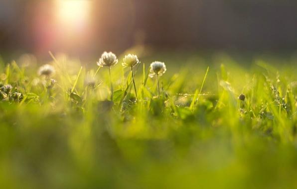 Картинка зелень, трава, солнце, лучи, цветы, фон, widescreen, обои, размытие, луг, wallpaper, цветочки, flower, широкоформатные, flowers, …