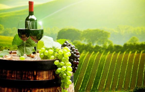 Картинка пейзаж, вино, поля, бутылка, бокалы, виноград, пробки, бочка, плантации