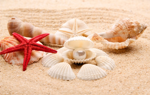 Картинка песок, море, пляж, берег, ракушки, summer, beach, sea, blue, sand, shore, paradise, starfish, seashells
