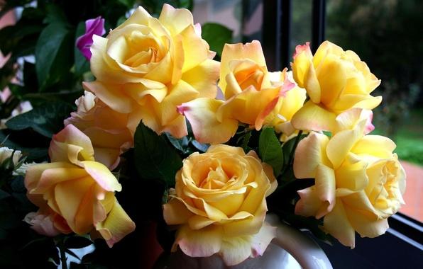 Картинка цветы, розы, букет, желтые, красивые, жёлтые