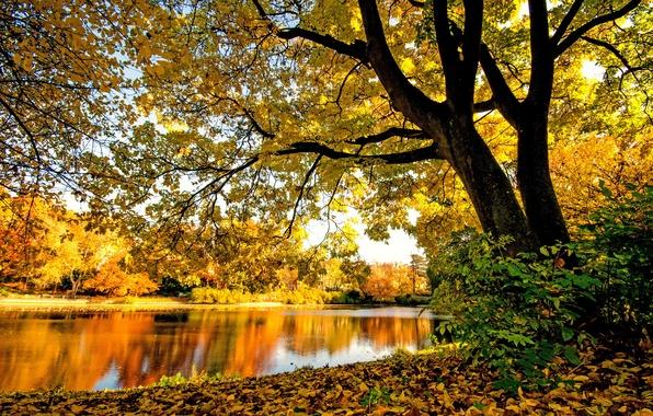Картинка осень, лес, деревья, ветки, река, листва, желтая