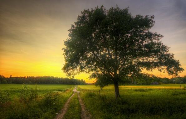 Картинка дорога, дом, дерево, поля, весна, утро, роща