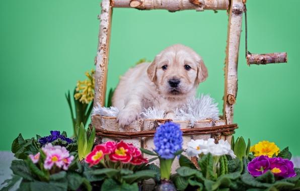 Картинка цветы, животное, собака, колодец, щенок