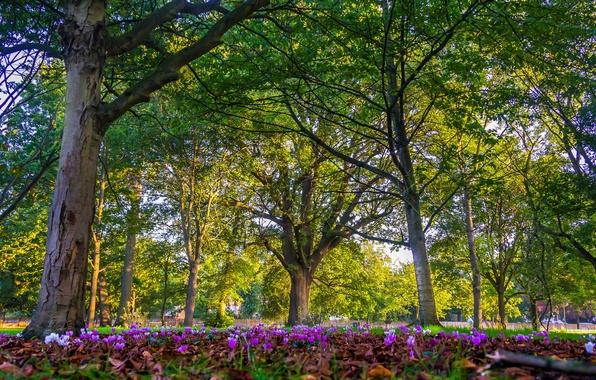 Картинка деревья, цветы, парк, Англия, Лондон, London, England