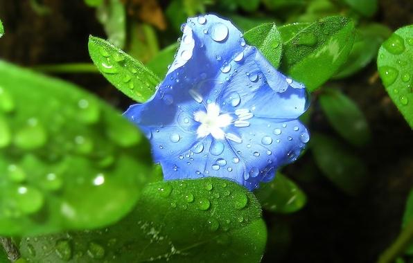 Картинка цветок, макро, цвет