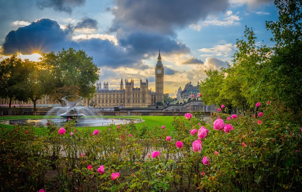 Картинка цветы, парк, Англия, Лондон, розы, Биг-Бен, фонтан, кусты, Вестминстерский дворец, London, England, Big Ben, Palace …