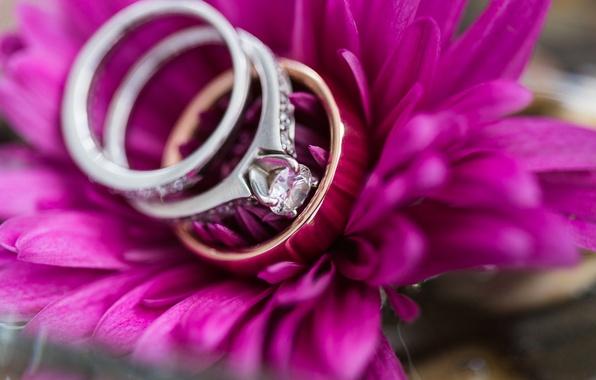 Картинка цветок, кольца, лепестки, свадьба, помолвка
