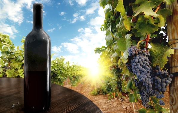Картинка небо, листья, солнце, облака, ягоды, стол, вино, чёрный, бутылка, виноград, гроздь, виноградник, black, sky, clouds, …
