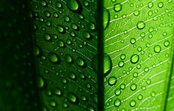 Картинка листья, вода, капли, макро, зеленый, роса, фон, green, widescreen, обои, капля, листик, wallpaper, листочек, широкоформатные, …