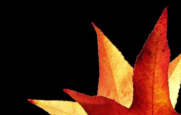 Картинка осень, лист, фон, золотистый