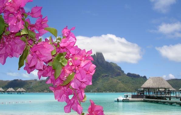 Картинка море, цветок, лето, берег, домик