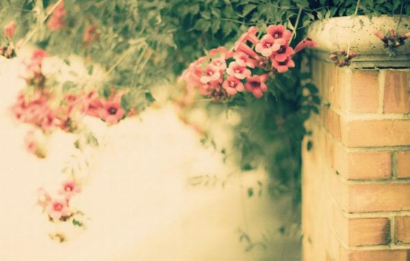 Картинка цветы, стиль, фон, забор, текстура