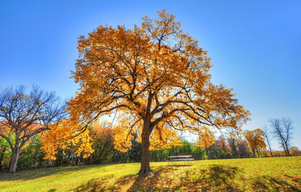 Картинка осень, небо, трава, парк, стол, дерево, скамья