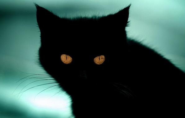Картинка кошка, кот, взгляд, фон, черный