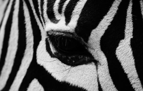 Картинка полоски, глаз, зебра