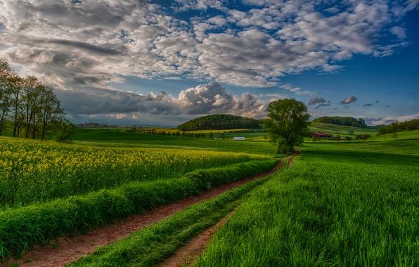 Картинка поле, небо, облака, деревья, пейзаж, закат, природа, вид, road, sky, trees, field, landscape, nature, sunset, …