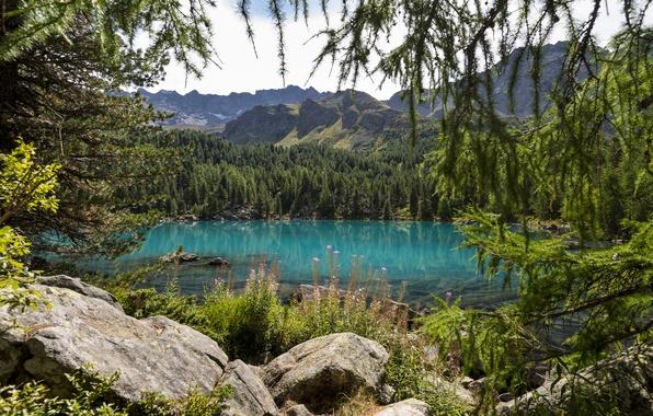 Картинка лес, деревья, цветы, горы, природа, озеро, ель, хвойные