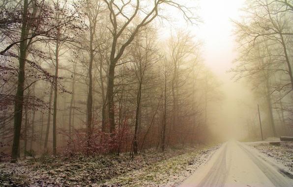 Картинка иней, дорога, лес, снег, деревья, следы, Зима