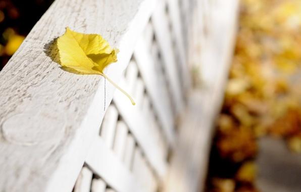 Картинка цветок, макро, цветы, желтый, фон, розовый, widescreen, обои, лепестки, листик, wallpaper, листочек, flower, широкоформатные, background, ...