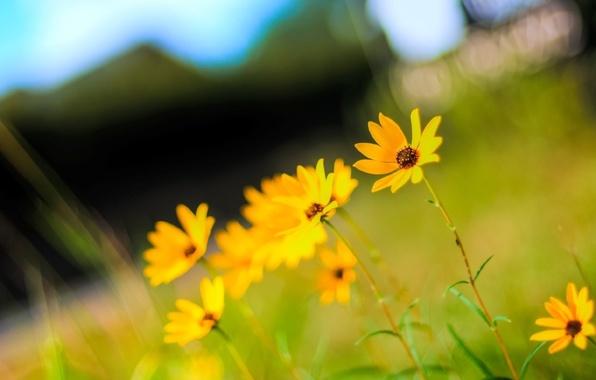 Картинка лето, солнце, макро, цветы, фото