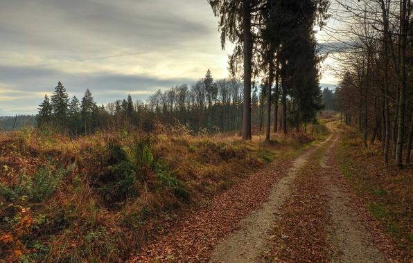 Картинка дорога, листва, вечер, Осень, листопад, road, autumn, leaves, evening, fall
