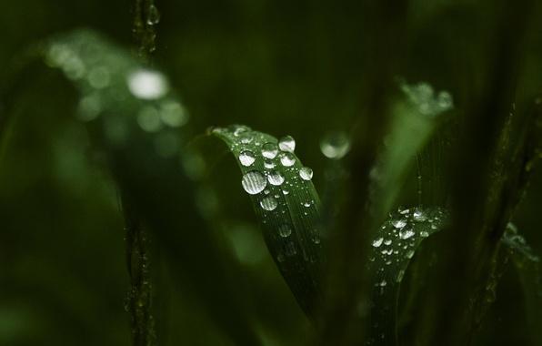 Картинка зелень, листья, вода, капли, макро, роса, фон, widescreen, обои, wallpaper, листочки, широкоформатные, background, полноэкранные, HD …