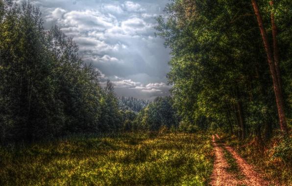 Обои картинки фото лес дорога