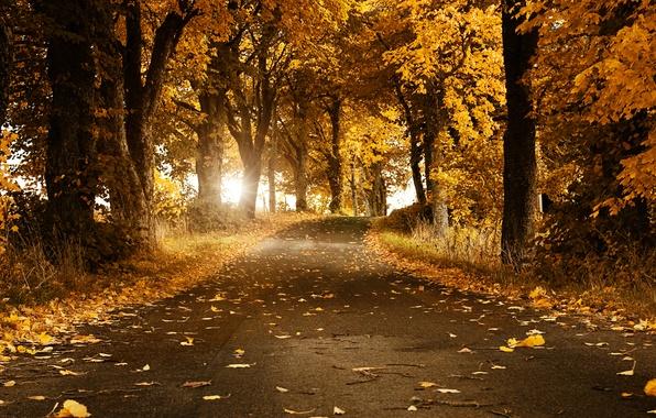 Картинка дорога, осень, листья, деревья, Швеция