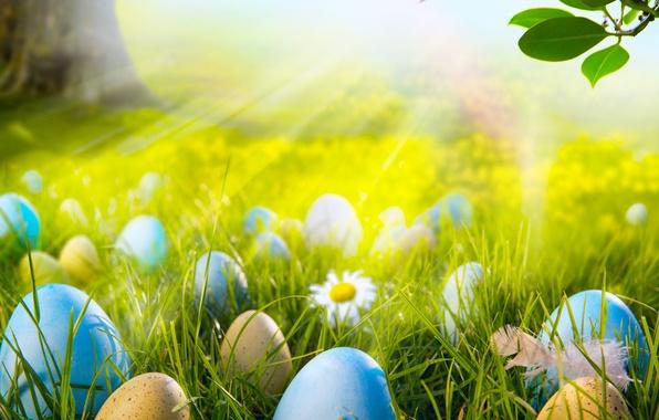 Картинка лес, трава, солнце, свет, цветы, ромашки, яйца, весна, луг, пасха, grass, sunshine, forest, flowers, spring, …