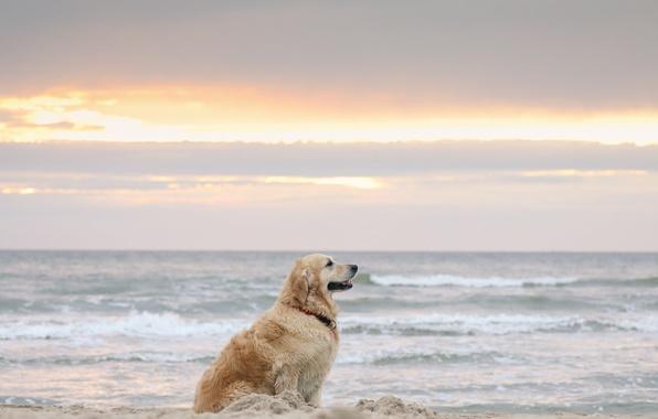 Картинка море, друг, берег, собака