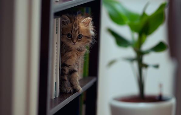 Картинка кошка, книги, Daisy, © Ben Torode