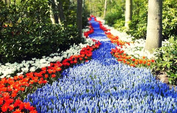 Картинка дорога, зелень, лес, солнце, цветы, тюльпаны, Голандия, тропинка