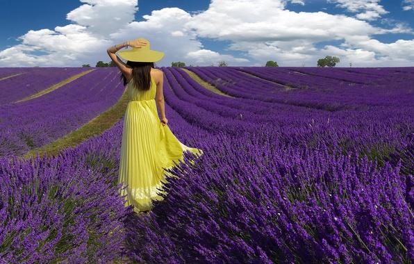 Картинка поле, лето, девушка, лаванды