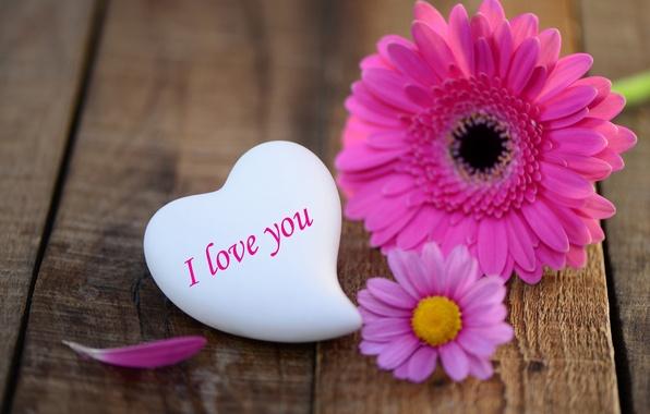Картинка цветок, любовь, праздник, сердце, love, flower, heart, гербера, holiday, love you, gerbera