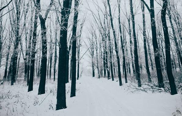 Чернобелые картинки деревья зимой