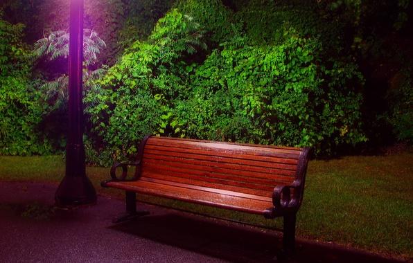 Картинка свет, деревья, вечер, фонарь, кусты, скамья