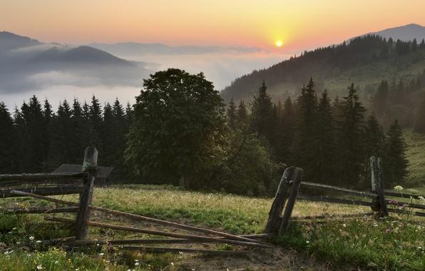 Картинка лес, небо, трава, солнце, облака, деревья, пейзаж, закат, цветы, горы, природа, туман, ограждение, Украина, Україна, …