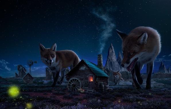 Картинка ночь, дом, рисунок, лисы