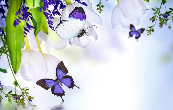 Картинка вода, цветы, коллаж, бабочка, растение